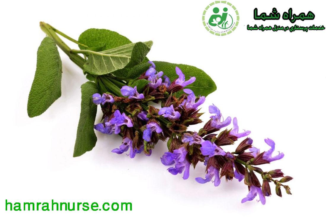 برترین گیاهان دارویی